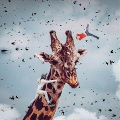 freetoedit remixit giraffe man kid ftestickers