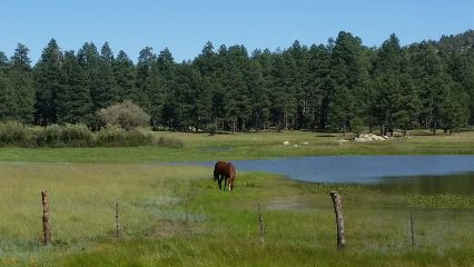 horselove forest lake