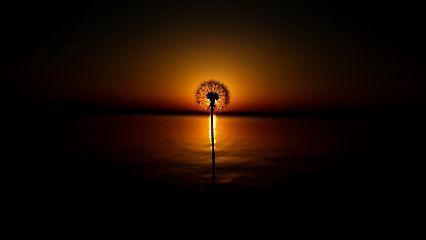 dandelion sunset nature