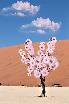 freetoedit yesi_502 interesting flowers pink