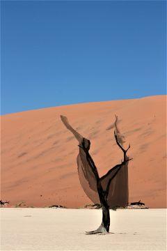 desert ballerina sticker tree woman freetoedit