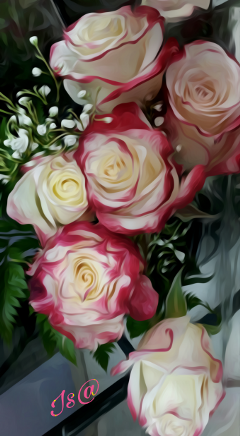 roses colorful myview photography blossom