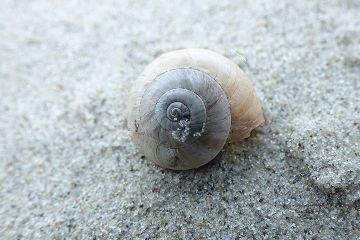 photography beach shell macro freetoedit