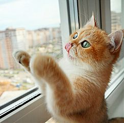 zoo животные cat cats kitten