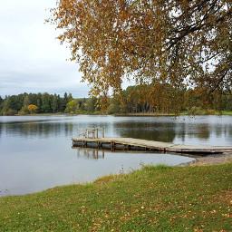 fall lake nature tree