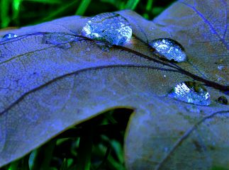 freetoedit drop leaf