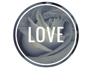 love rose white circle myphoto freetoedit
