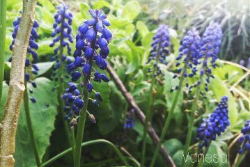 dramaeffect nature flowers violet dpcsunflowers