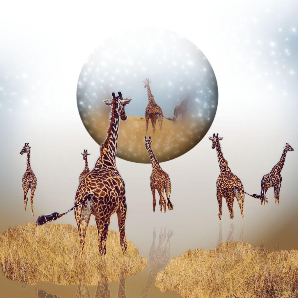 #madewithpicsart #giraffes ORIGINAL picture from @pafreetoedit 🍃💛