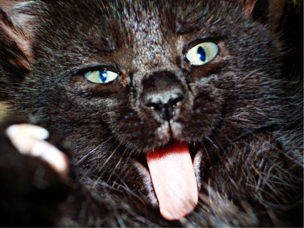 #black #kitten #fluff #remixit #freetoedit