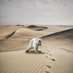 freetoedit polarbear polar desert edit