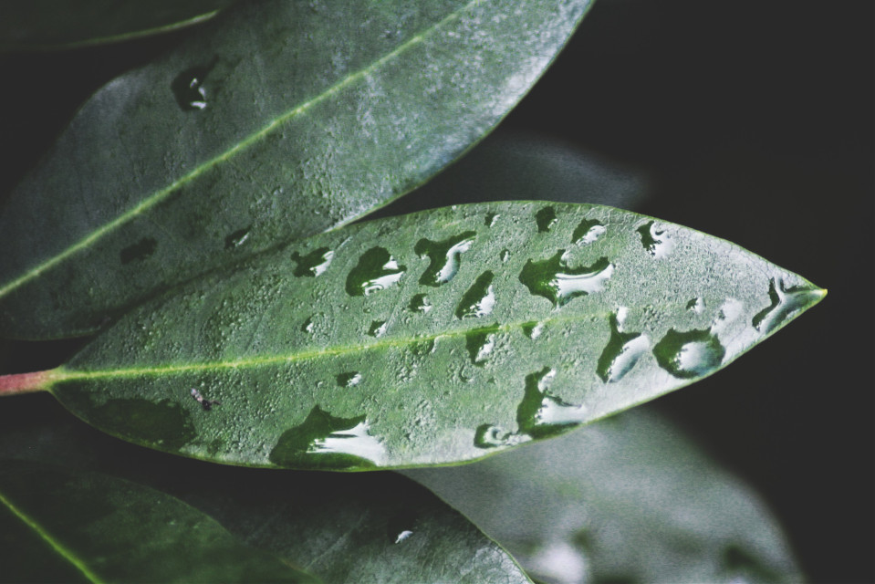 #leaf #plant #aftertherain #nature