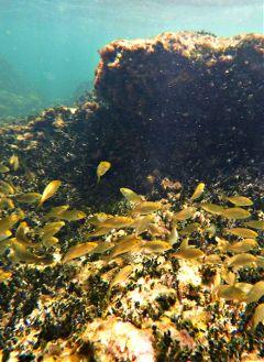 riff fish diving