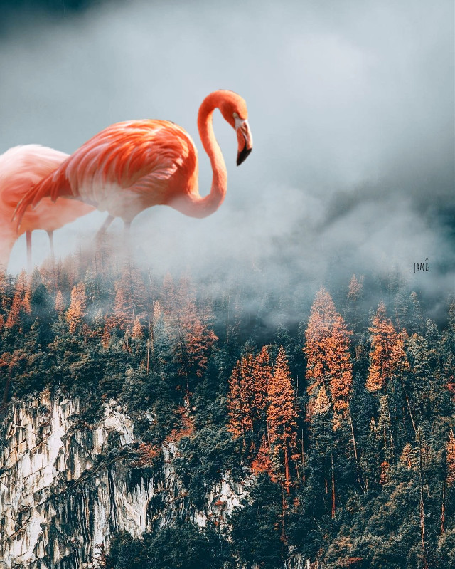 #freetoedit #flamingo #drams #clouds #floresta #planet