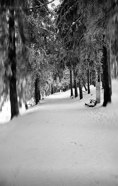 freetoedit snow winterwonderland trees nature