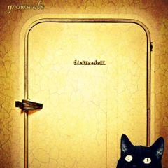 freetoedit photobomb old age cat