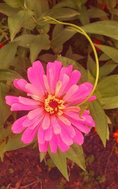 myphotography bloom flower neworleans mothernaturesartwork