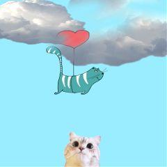 dailysticker cat kitten fly sky freetoedit