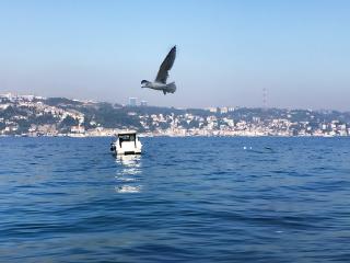 freetoedit sea seagull
