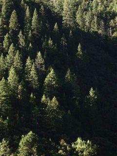 freetoedit nature photography background trees