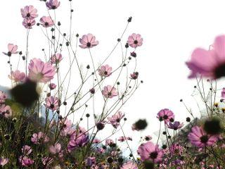 freetoedit nature photography flower pink
