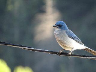 freetoedit nature photography bird wildlife