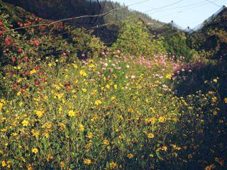 freetoedit nature photography landscape flowers
