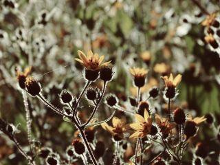 freetoedit nature photography flower yellow