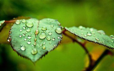 freetoeditremix plant dream awesome loveit
