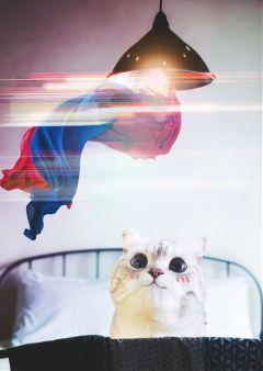 kittenstickerremix lamp light curtains myedit freetoedit