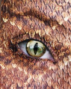 freetoedit eyeedit snakeeye lizardeye scales