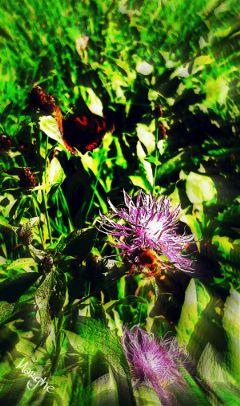 butterfly bee last flowers meadow
