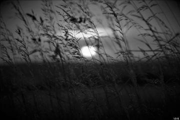 sunset grass nature blackandwhite freetoedit