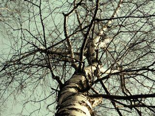 freetoedit tree nature autumn photography