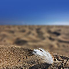 freetoedit feather onthebeach assateagueisland myoriginalphoto
