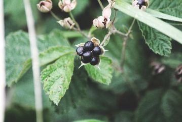 freetoedit autumn berrie