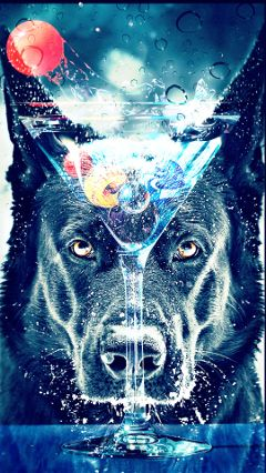 freetoedit dog martini marbles glass