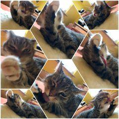 cat foxi happy