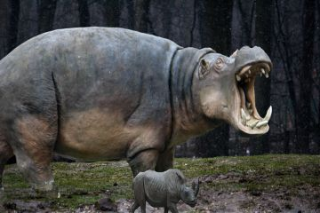 freetoedit rhinoday