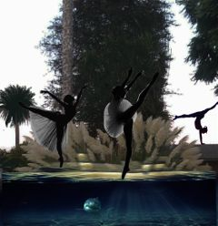 ballerinas aquarium photography myphotoshot nature freetoedit