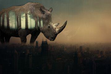 freetoedit rhinoday giantanimals doubleexposure urban