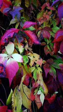 freetoedit autumn leaves colorful
