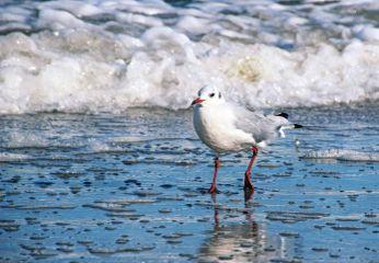 myphoto seagullsaturday seagull bird sea