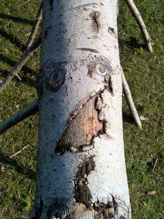 tree face freetoedit