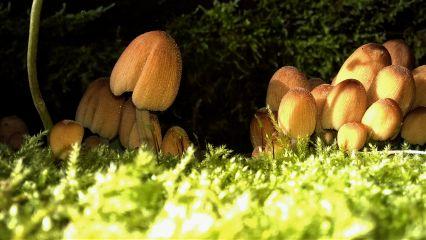 mushrooms freetoedit