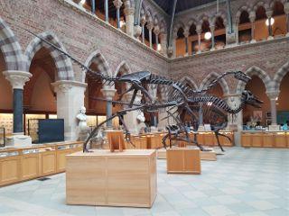 oxford travel dinosaur skeleton history freetoedit