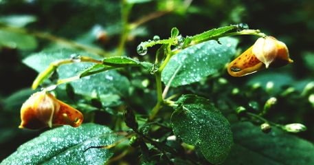 freetoedit mypic raindrops flowers