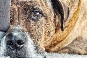 freetoedit dogs dogsofpicsart dog pets
