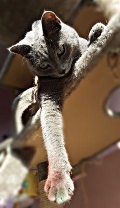 catlover cats catsphotography catstagram catsofpicsart