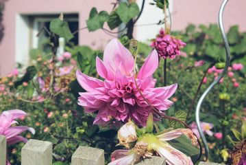 freetoedit flower beautiful autumn myoriginalphoto